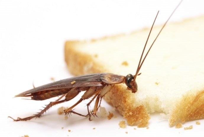 Уничтожение тараканов с гарантией в Красноярске | ДЕЗ-Комфорт